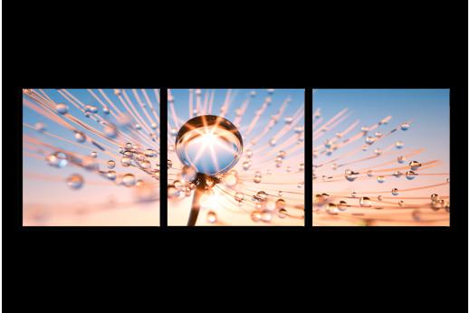 Модульная картина Одуванчик макро с каплями