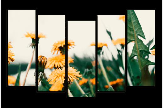 Модульная картина Жёлтые одуванчики в траве