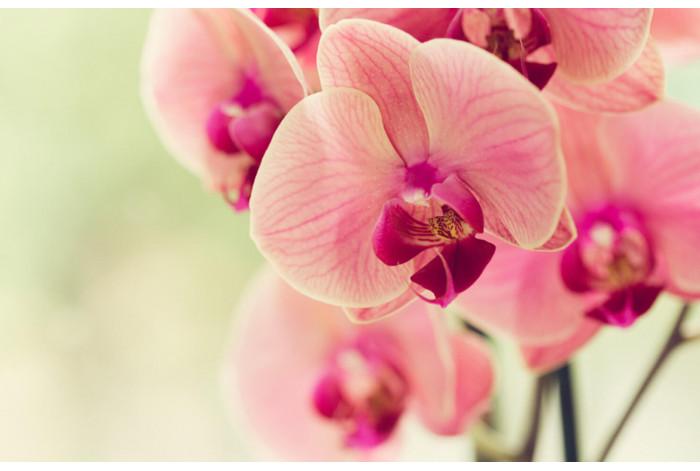 Модульная картина Розовая орхидея