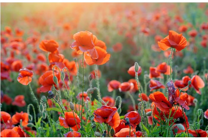 Картина из 2 частей Полевые цветы