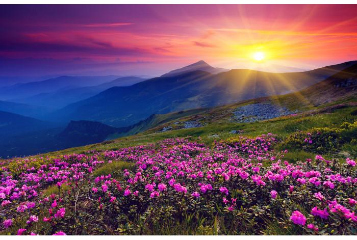 Модульная картина Рассвет Горы и Цветы
