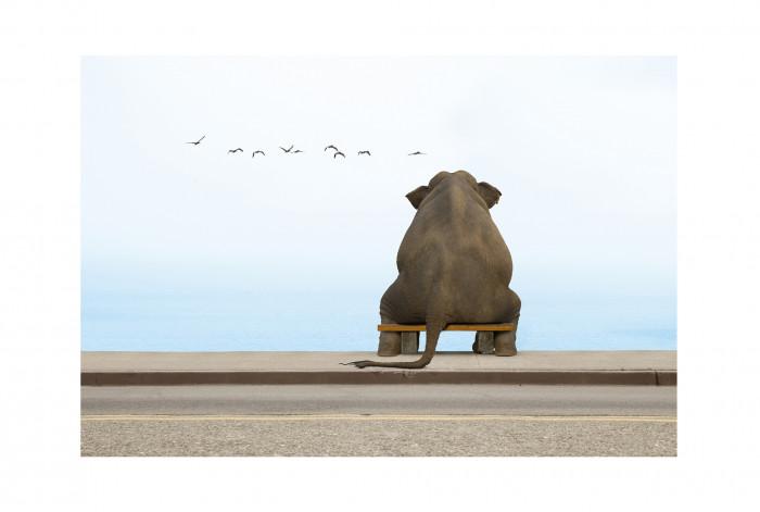 Фотокартина слон на скамье