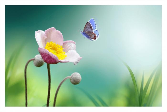 Модульная картина Бабочка и цветок