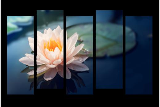 Модульная картина Лилия водяная