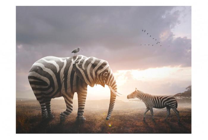 Картина Слон и зебра