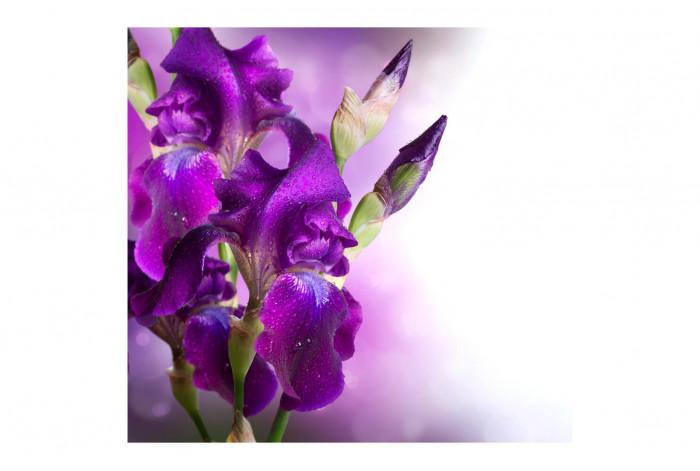 Картина Ирис фиолетовый