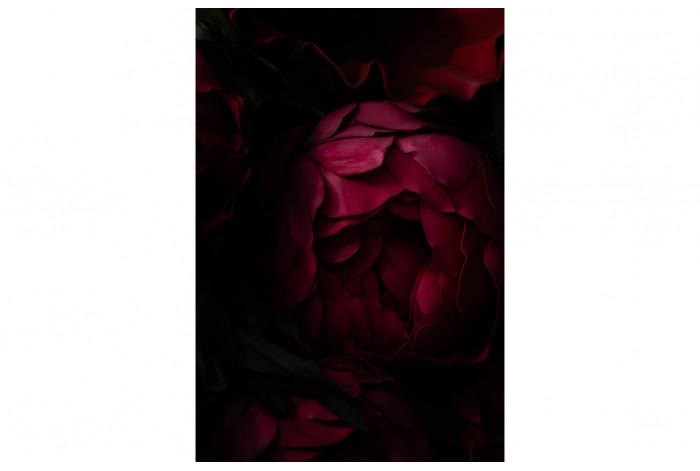 Картина Тёмно-бордовый пион