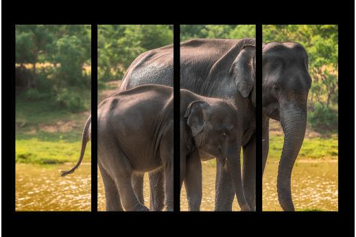 Модульная картина Слоны